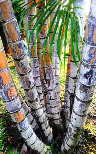 palm stalks