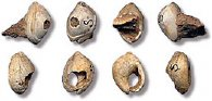 mollusc beads