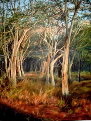 Fever trees, Gorongosa